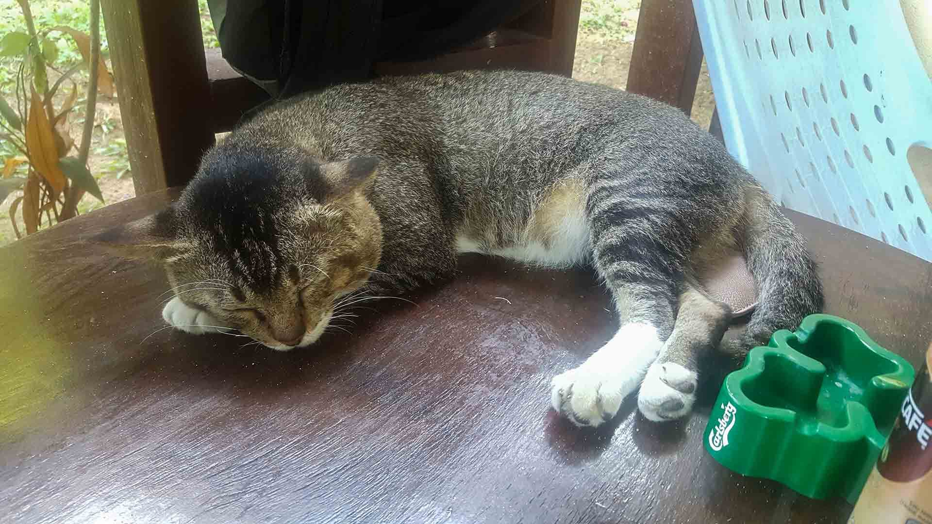 Cat sleeping on table in Tioman Island