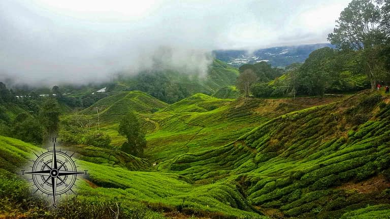 A Quick Stop in the Cameron Highlands